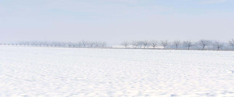 Oranice pod snijegom, Općina Tovarnik, siječanj 2019