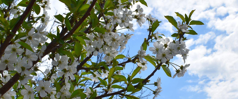 Stiglo nam je proljeće!
